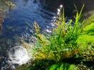 Reka Ribnica