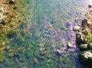 reka-ribnica_5